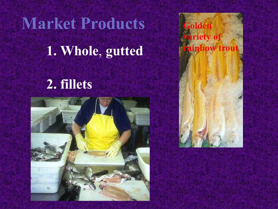 Market Products Whole, gutted fillets Golden variety of rainbow trout