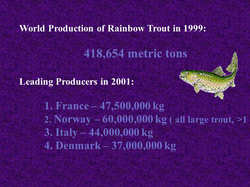 4. Denmark – 37,000,000 kg World Production of Rainbow Trout in 1999: