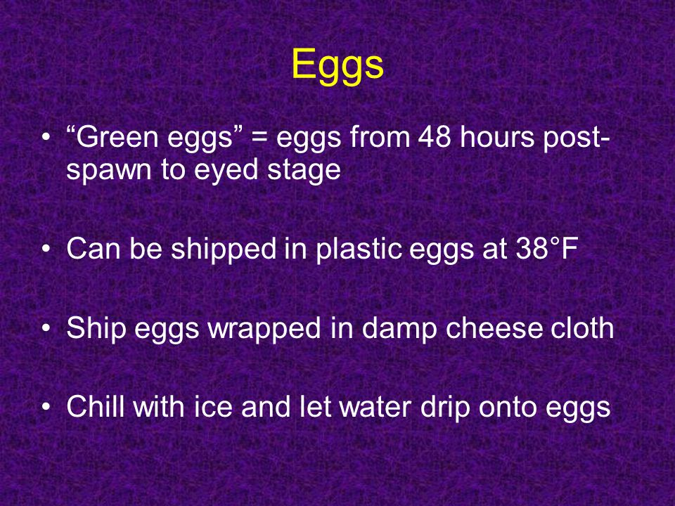 Eggs Green eggs = eggs from 48 hours post-spawn to eyed stage