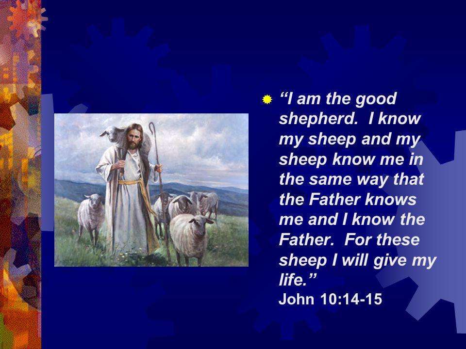 I am the good shepherd.