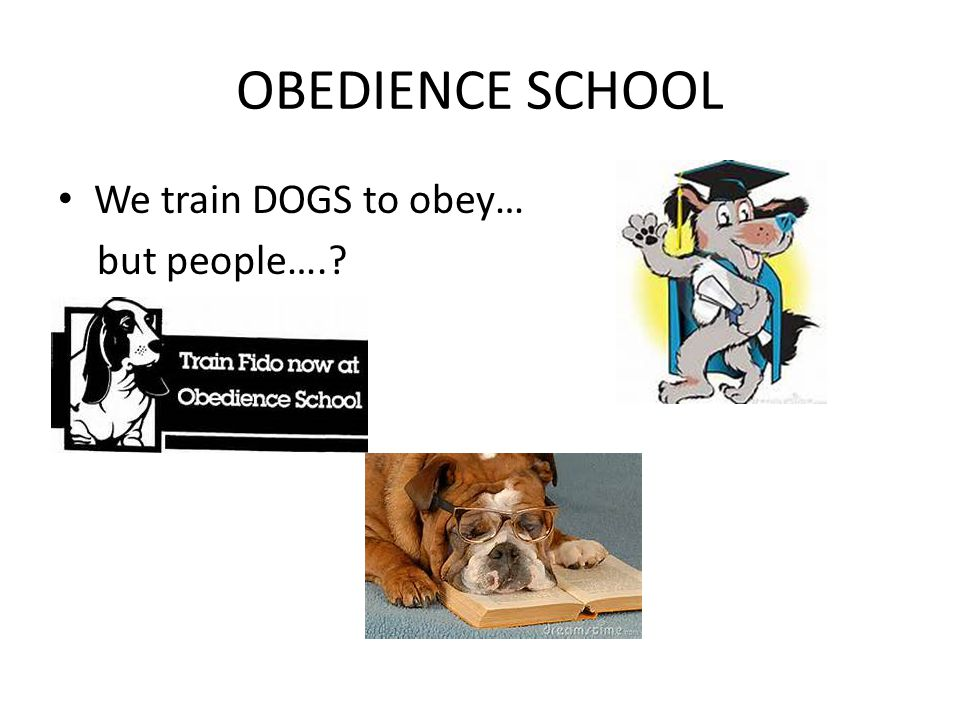 OBEDIENCE SCHOOL We train DOGS to obey… but people….