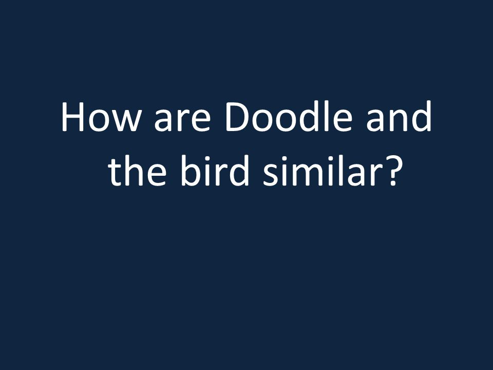 How are Doodle and the bird similar