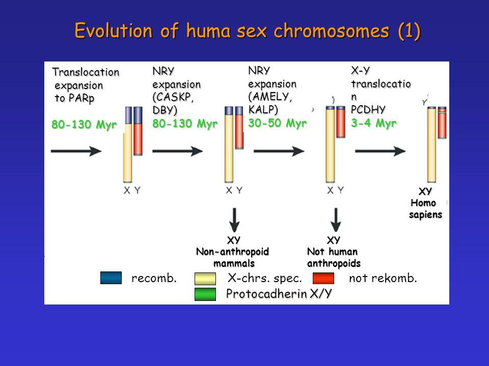 Evolution of huma sex chromosomes (1)