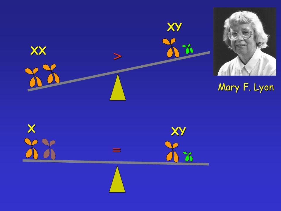 XY XX > Mary F. Lyon XY X =