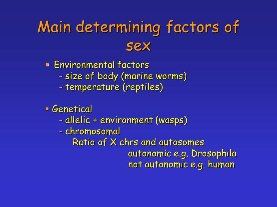 Main determining factors of sex