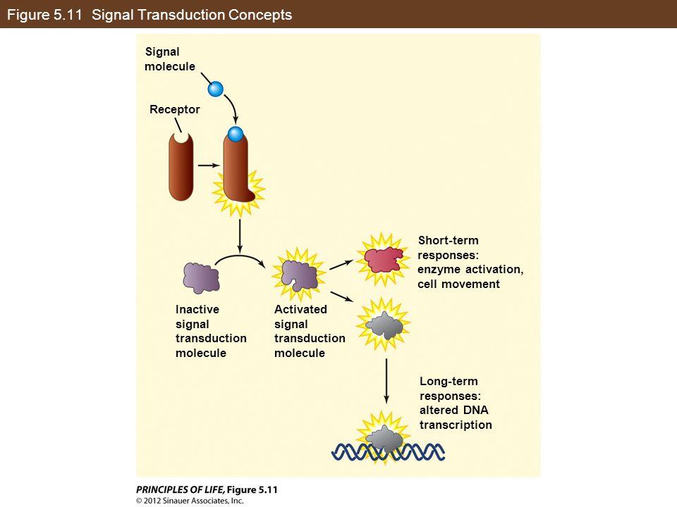Figure 5.11 Signal Transduction Concepts