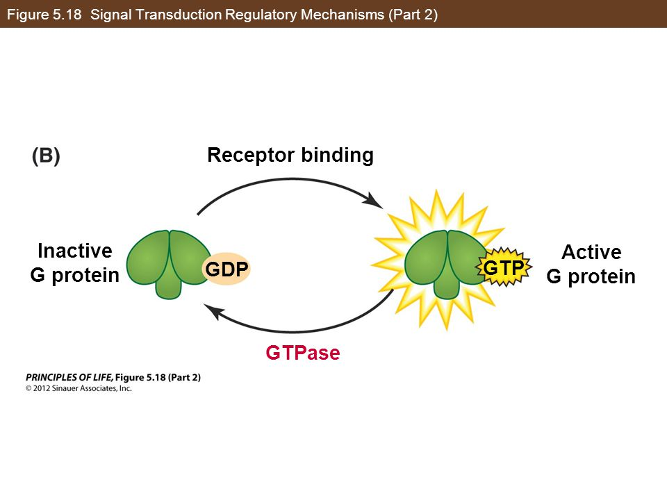 Figure 5.18 Signal Transduction Regulatory Mechanisms (Part 2)
