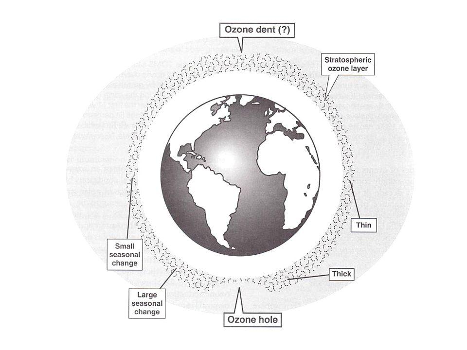 Summary Turco, 2002