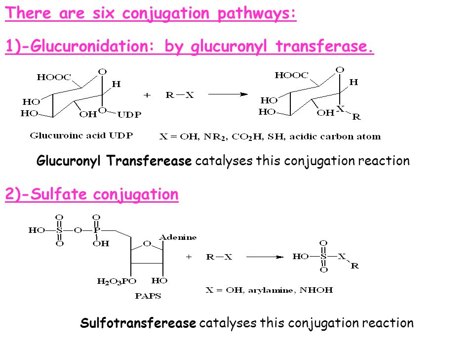 Sulfotransferease catalyses this conjugation reaction
