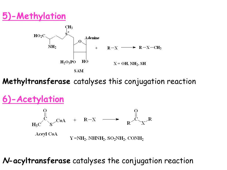 5)-Methylation 6)-Acetylation