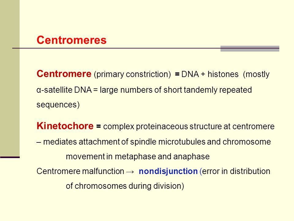 Centromeres Centromere (primary constriction) = DNA + histones (mostly α-satellite DNA = large numbers of short tandemly repeated sequences)
