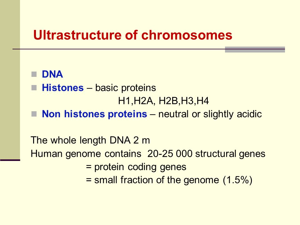 Ultrastructure of chromosomes