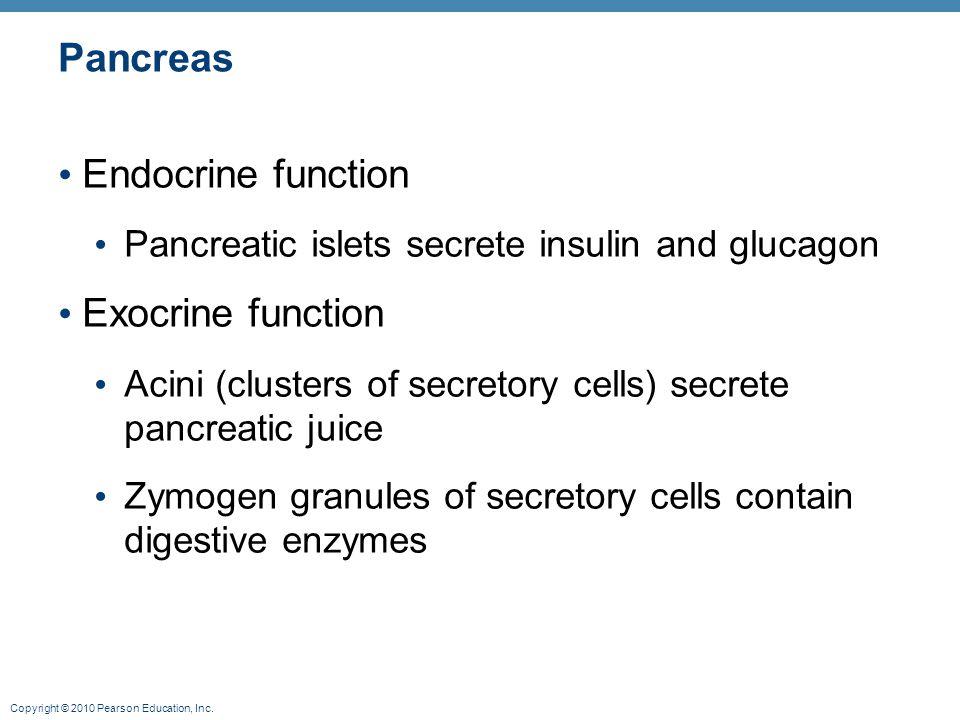 Pancreas Endocrine function Exocrine function