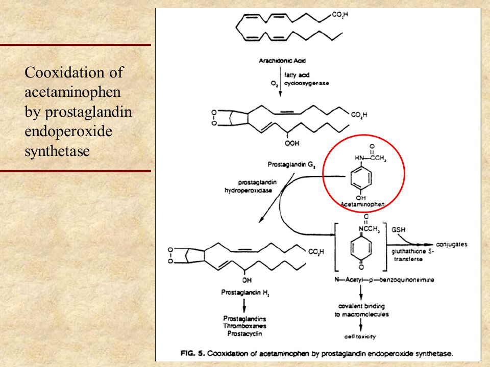 Cooxidation of acetaminophen