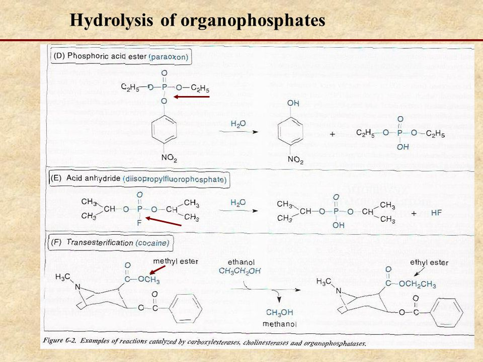 Hydrolysis of organophosphates