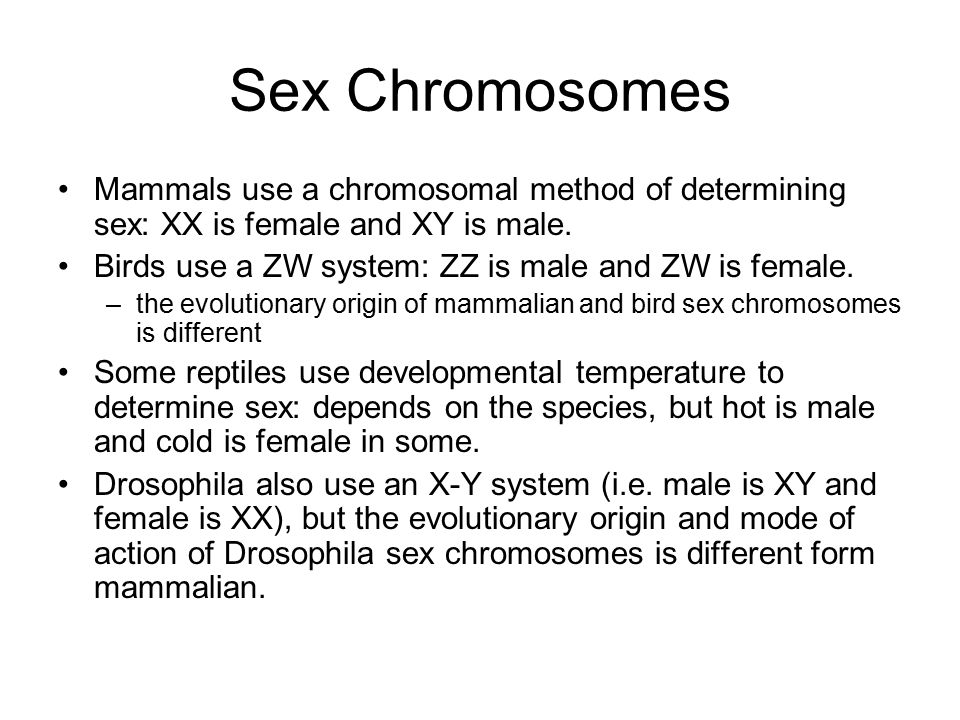 Sex Chromosomes Mammals use a chromosomal method of determining sex: XX is female and XY is male.