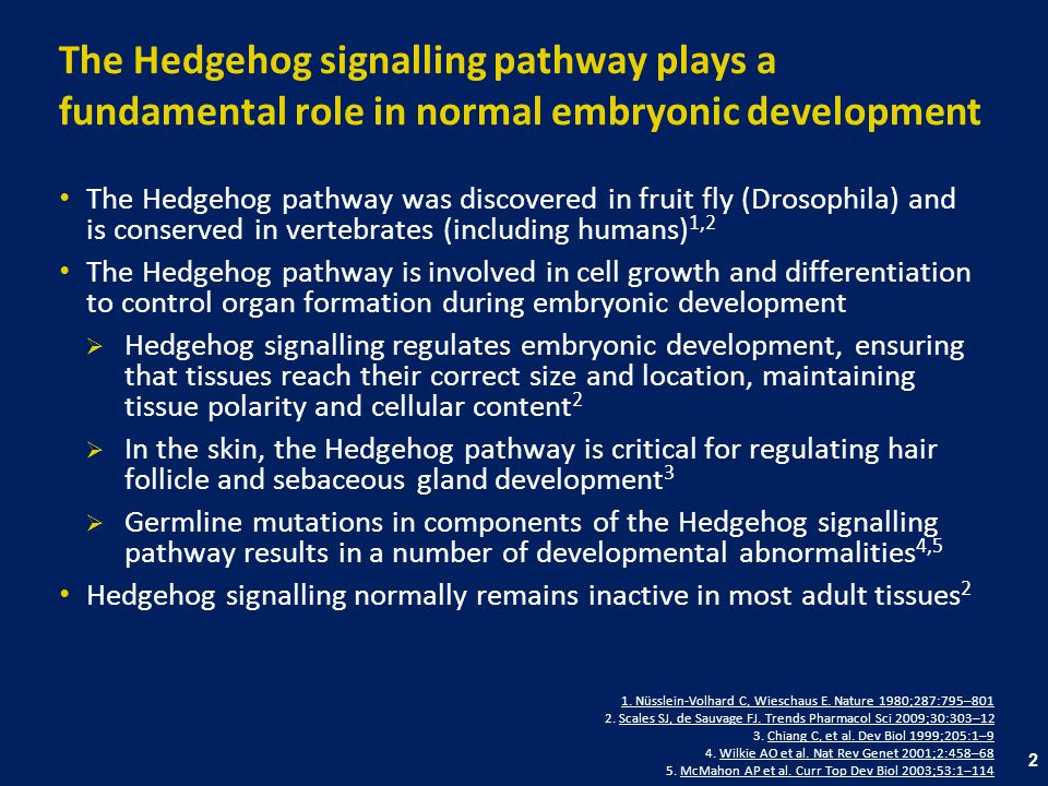 The Hedgehog signalling pathway plays a fundamental role in normal embryonic development