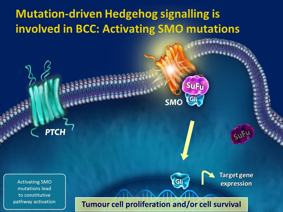 Target gene expression Tumour cell proliferation and/or cell survival