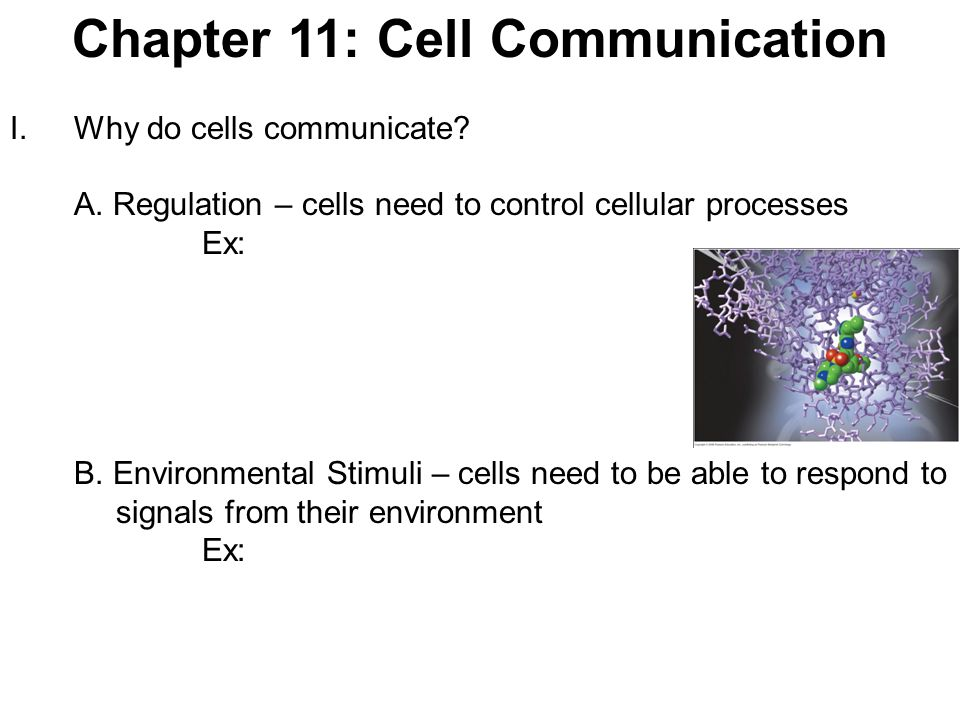 Chapter 11: Cell Communication
