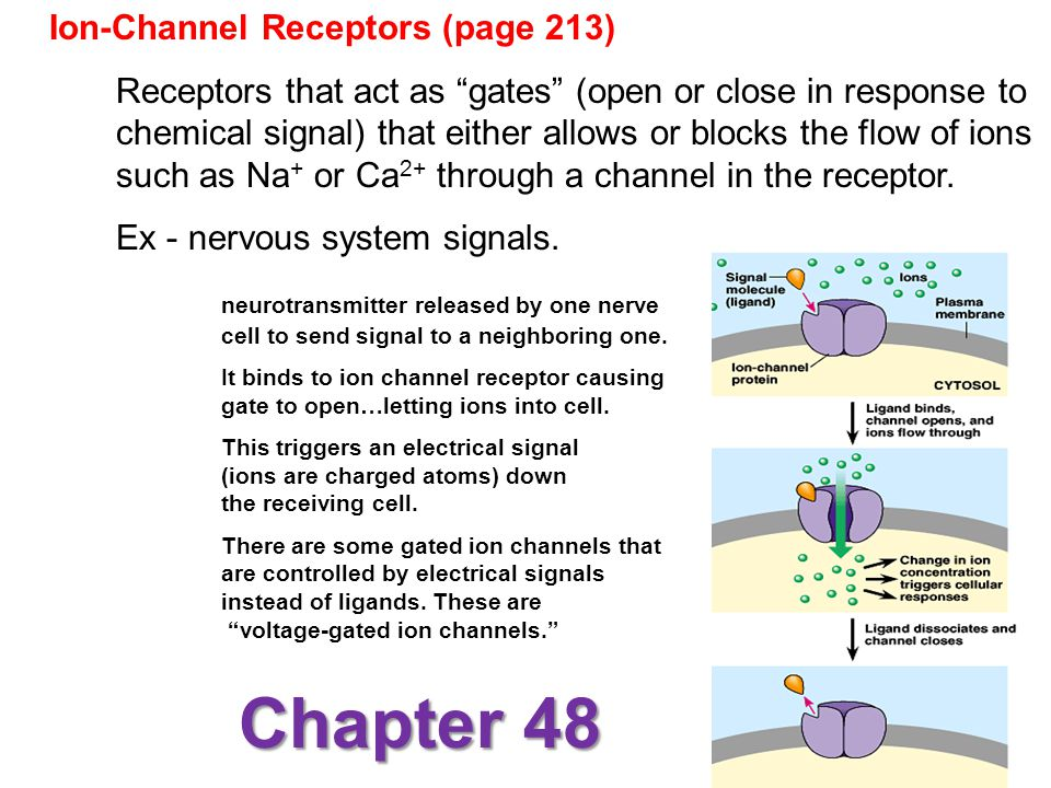 Chapter 48 Ion-Channel Receptors (page 213)