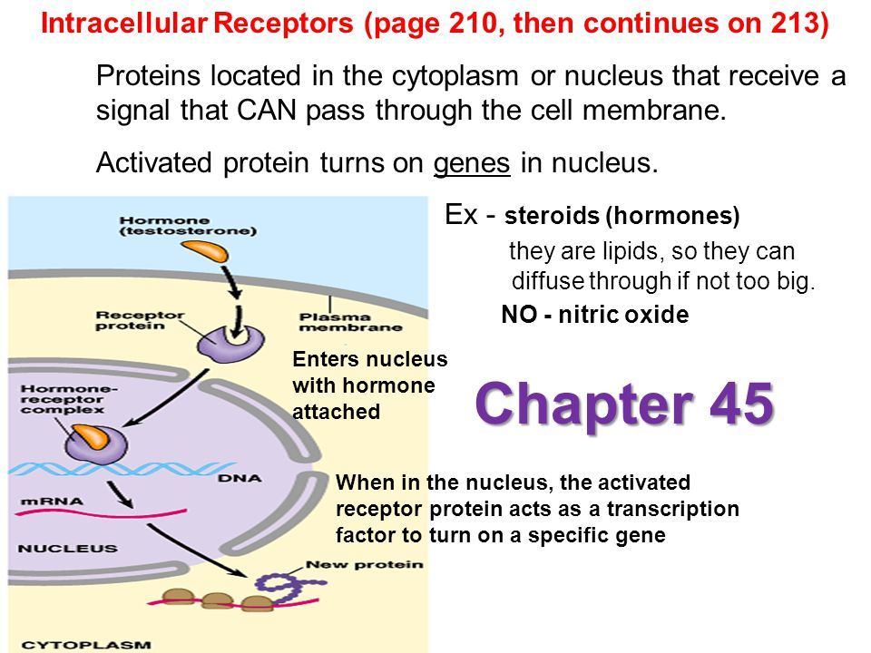 Chapter 45 Intracellular Receptors (page 210, then continues on 213)