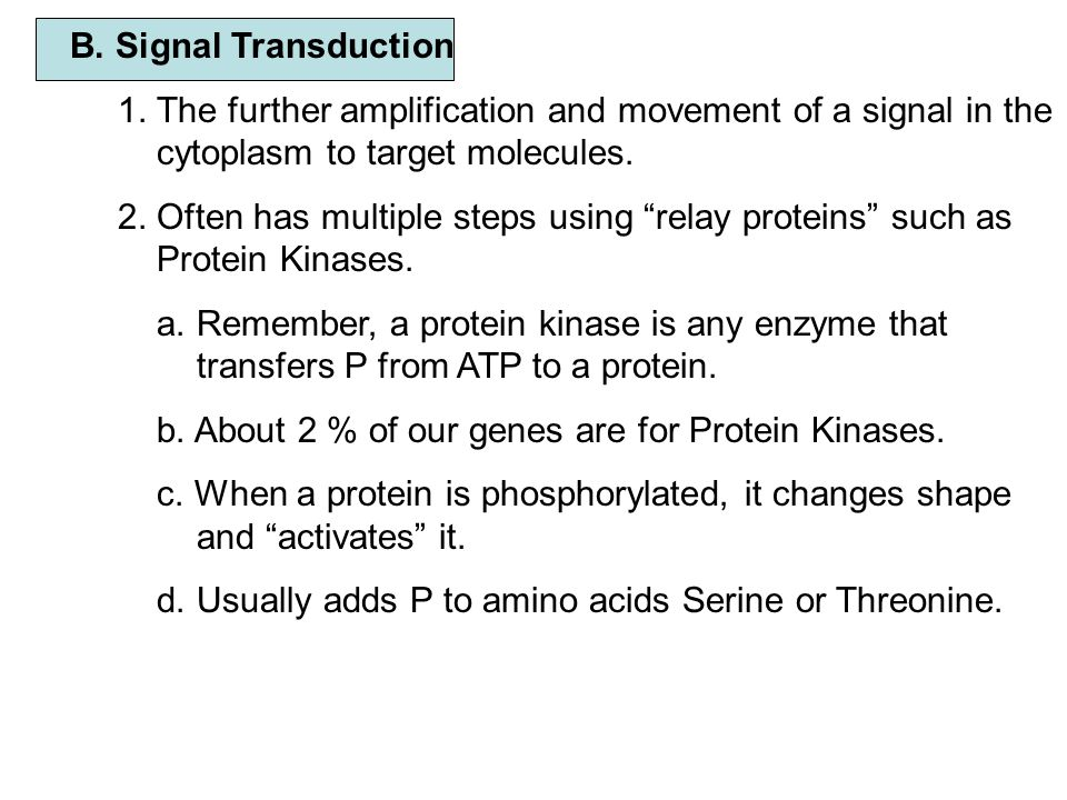 B. Signal Transduction 1. The further amplification and movement of a signal in the cytoplasm to target molecules.