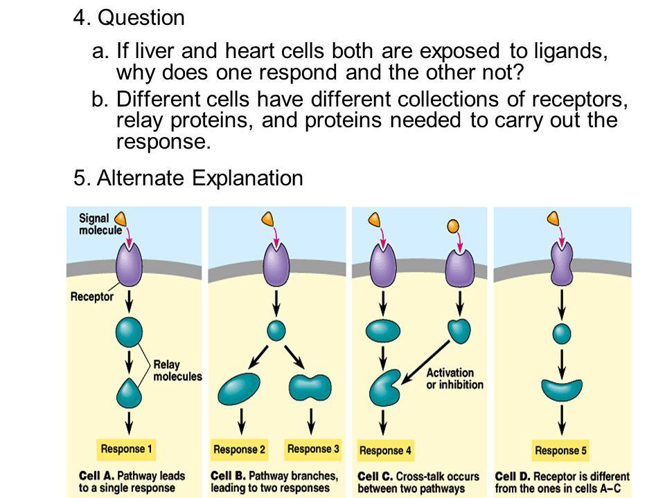 5. Alternate Explanation