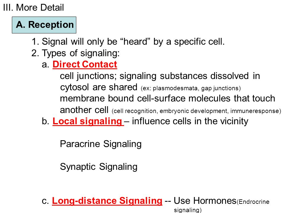 III. More Detail A. Reception. 1. Signal will only be heard by a specific cell. 2. Types of signaling: