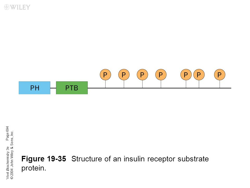 Figure 19-35 Structure of an insulin receptor substrate protein.