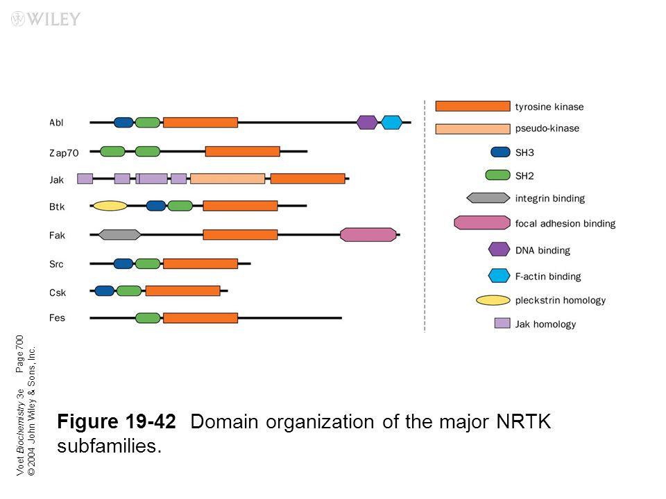 Figure 19-42 Domain organization of the major NRTK subfamilies.