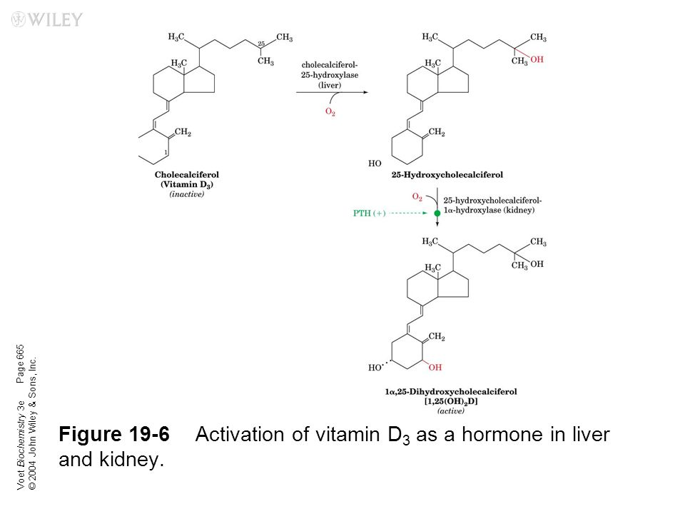 Figure 19-6 Activation of vitamin D3 as a hormone in liver and kidney.