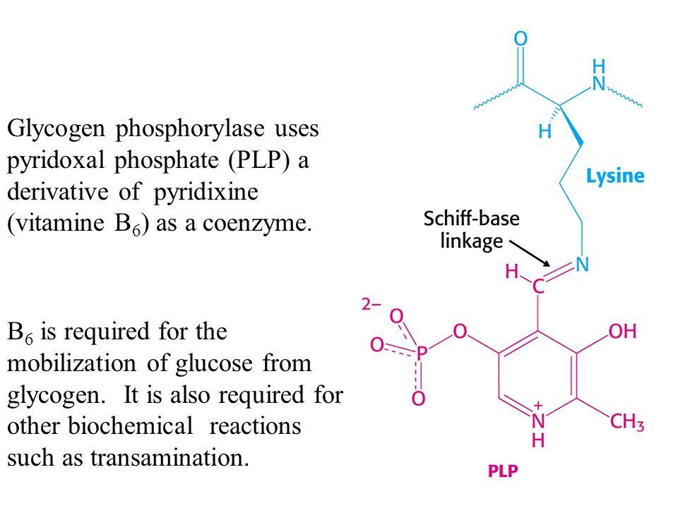Glycogen phosphorylase uses pyridoxal phosphate (PLP) a derivative of pyridixine (vitamine B6) as a coenzyme.