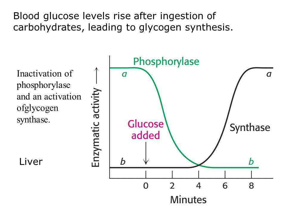 Blood glucose levels rise after ingestion of carbohydrates, leading to glycogen synthesis.