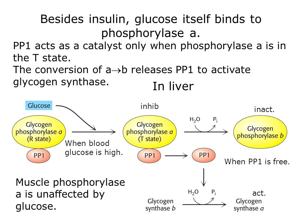 Besides insulin, glucose itself binds to phosphorylase a.