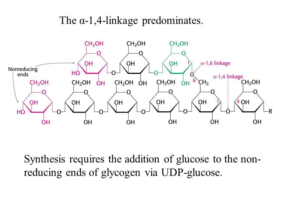 The α-1,4-linkage predominates.