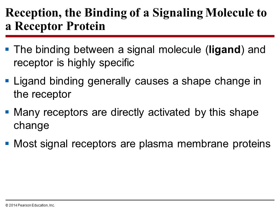 Reception, the Binding of a Signaling Molecule to a Receptor Protein