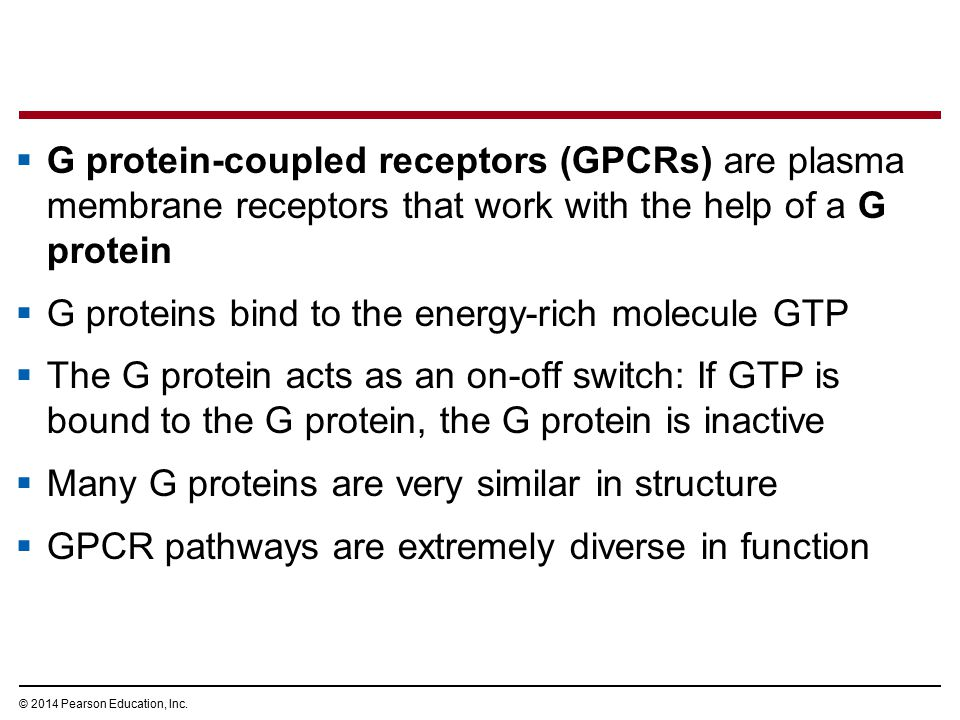 G proteins bind to the energy-rich molecule GTP