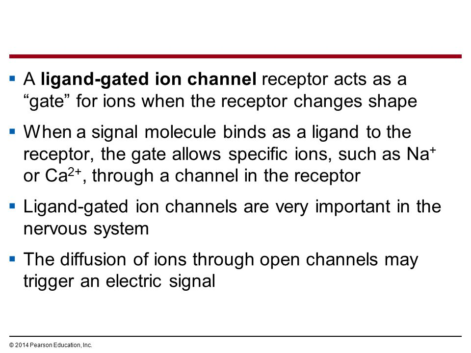 Ligand-gated ion channels are very important in the nervous system