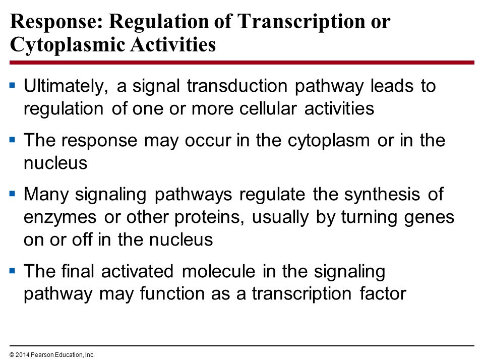 Response: Regulation of Transcription or Cytoplasmic Activities