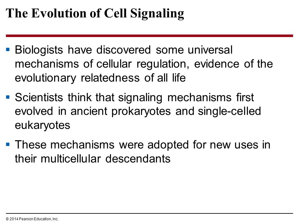 The Evolution of Cell Signaling