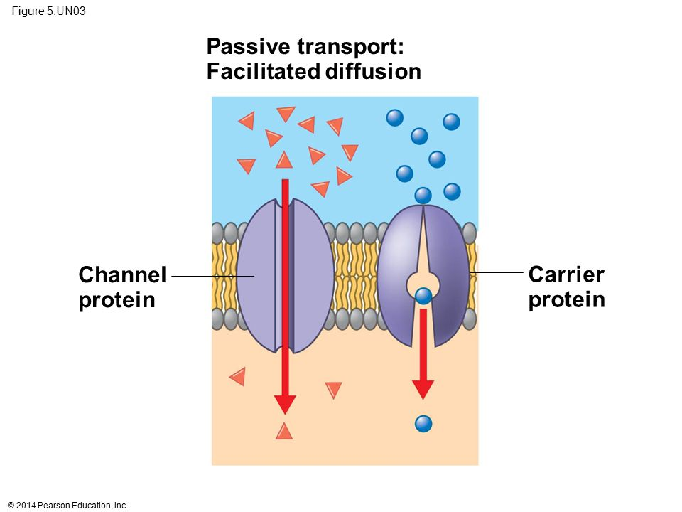 Facilitated diffusion