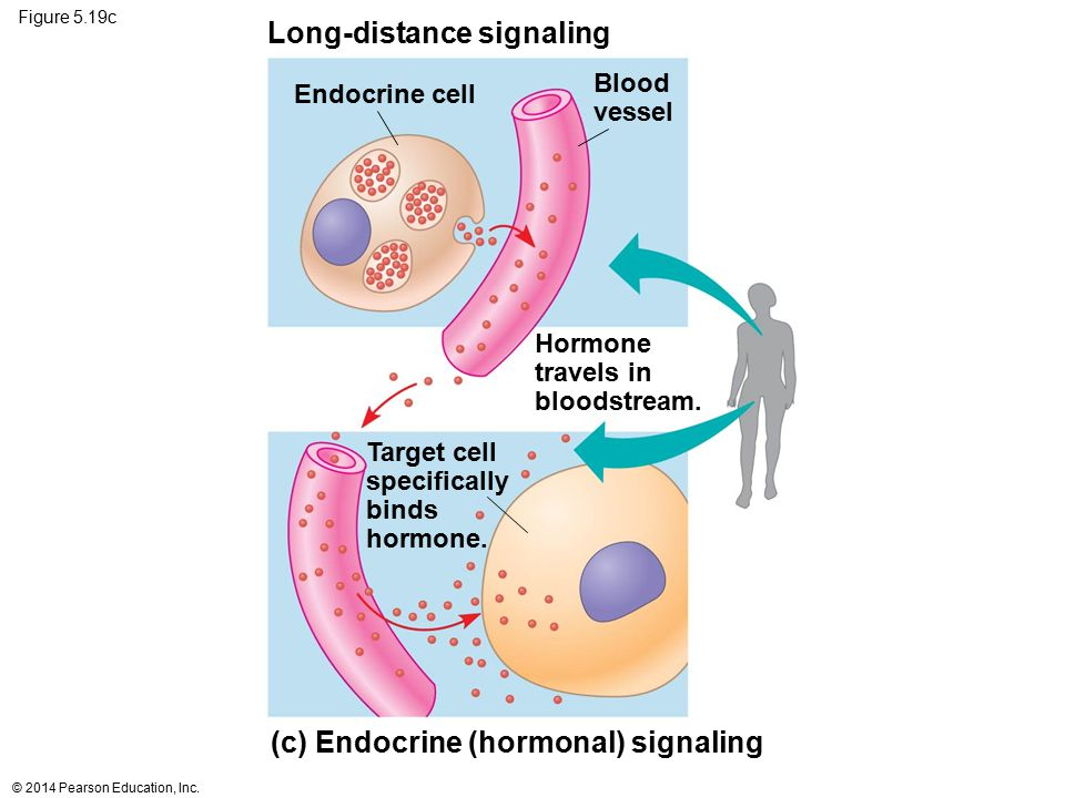 Long-distance signaling