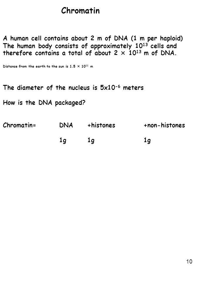 Chromatin A human cell contains about 2 m of DNA (1 m per haploid)