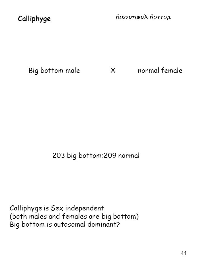 Calliphyge eautiful Big bottom male X normal female. 203 big bottom:209 normal. Calliphyge is Sex independent.