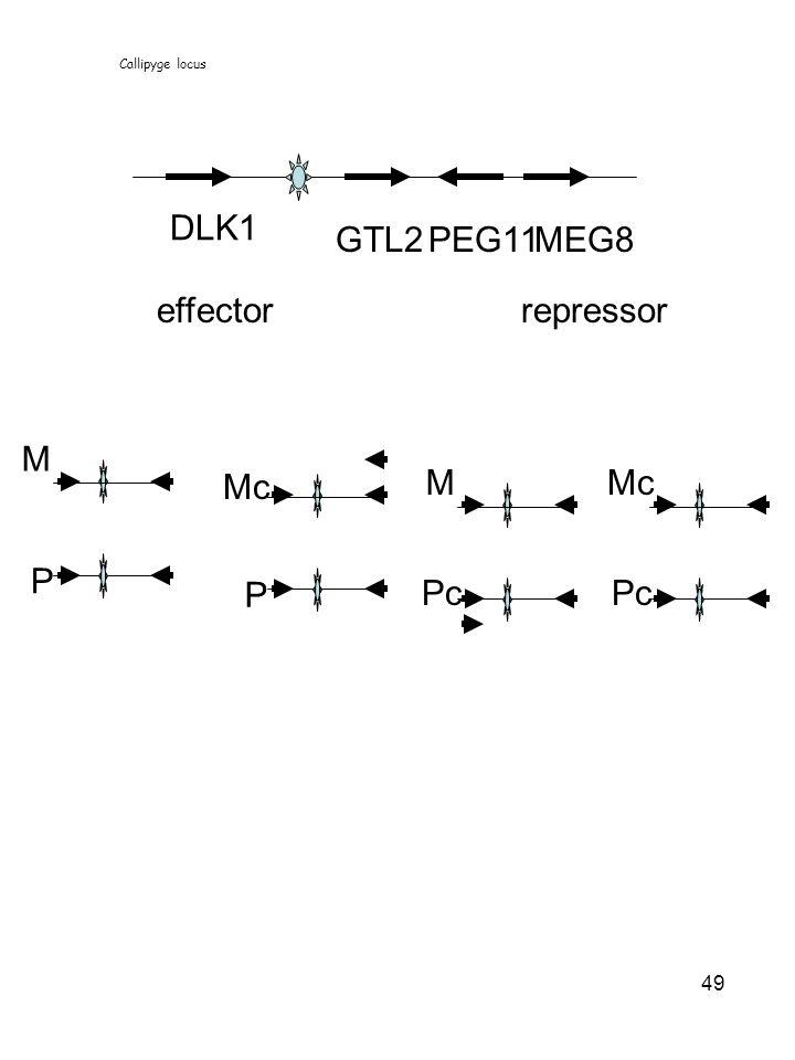 DLK1 GTL2 PEG11 MEG8 effector repressor M Mc M Mc P P Pc Pc