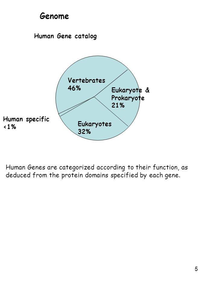 Genome Human Gene catalog Vertebrates 46% Eukaryote & Prokaryote 21%