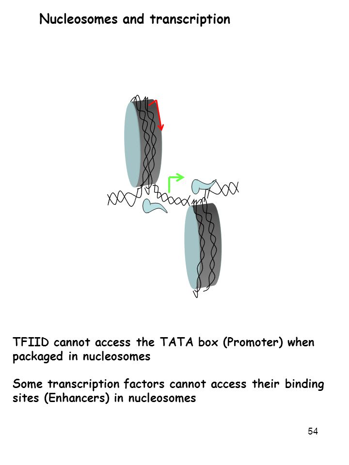 Nucleosomes and transcription