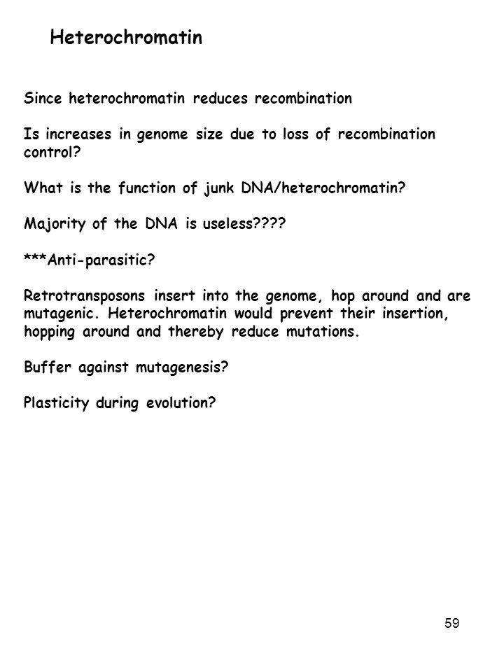 Heterochromatin Since heterochromatin reduces recombination