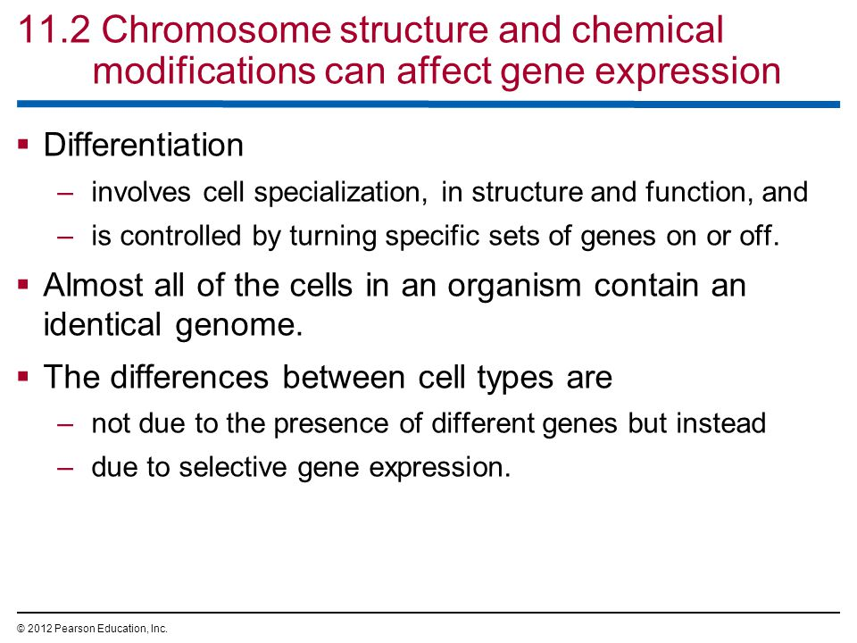 11.2 Chromosome structure and chemical modifications can affect gene expression