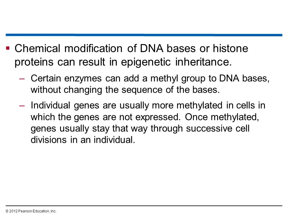 Chemical modification of DNA bases or histone proteins can result in epigenetic inheritance.